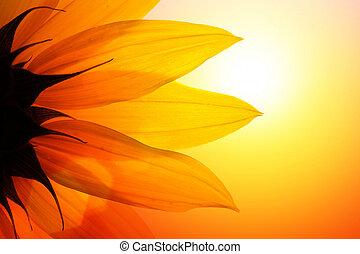 Close-up of sunflower over sunset sky