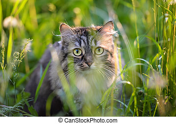 Tabby cat hiding in the grass