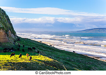 The cows grazes on beach by the ocean