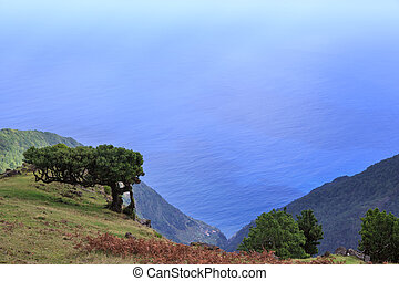 The north coast of Madeira Island near Ribeira Da Janela, Portugal