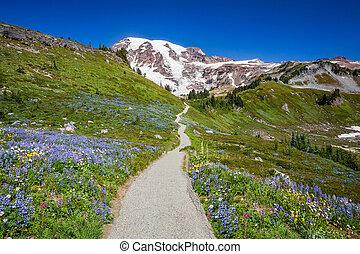 Trail to Mount Rainier
