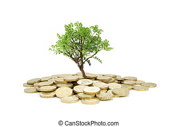 Tree growing from money