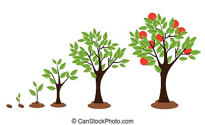 Vector illustration of tree growth diagram isolated on white