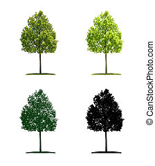 Tree in four different illustration techniques - Young oak tree
