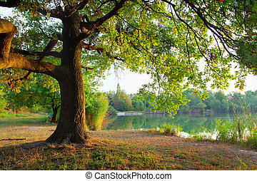 Tree in Summer forest.
