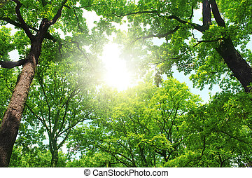 trees in a summer forest