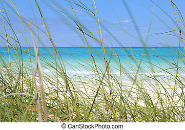 Green grass on the breeze of tropical beach, cayo coco, cuba.