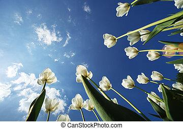 Tulip flowers over sky background