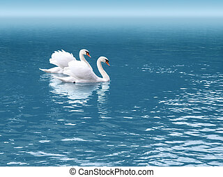 two swan