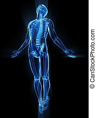 3d rendered illustration of a transparent male body