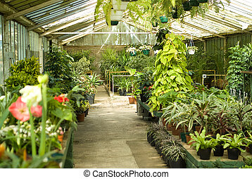 Assortment of Plants inside Greenhouse at Nursery