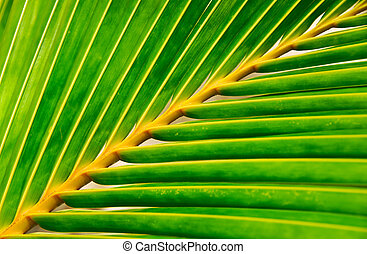 vivid palm leaf background and texture