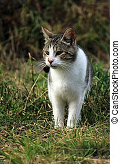 Wild cat in the grass