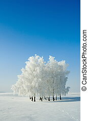 Winter landscape and trees