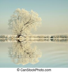 Winter tree on the lake shore