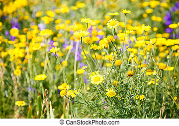 Yellow and Purple Wildflowers in Meadow
