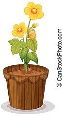 Yellow buttercup flowers in flowerpot