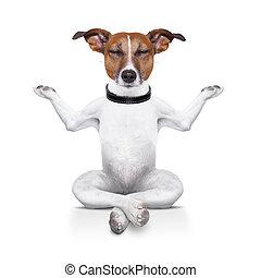 yoga dog sitting relaxed with closed eyes
